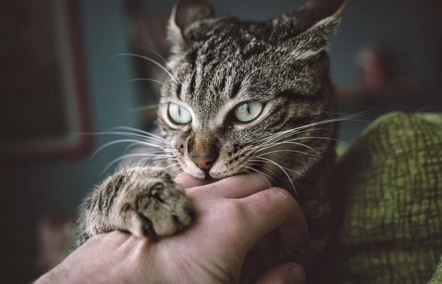 Trouble With Pet Cat Scratches